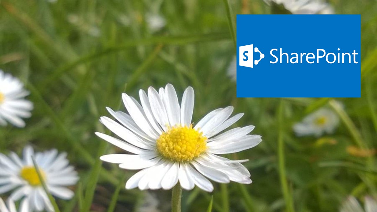 caase sharepoint digital workplace